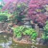 10SDK 戸建て 横浜市中区 庭