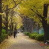 1K マンション 板橋区 公園