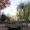 在墨田區內租賃1K 公寓大廈 的房產 公園