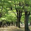 1LDK Apartment to Rent in Shibuya-ku Park