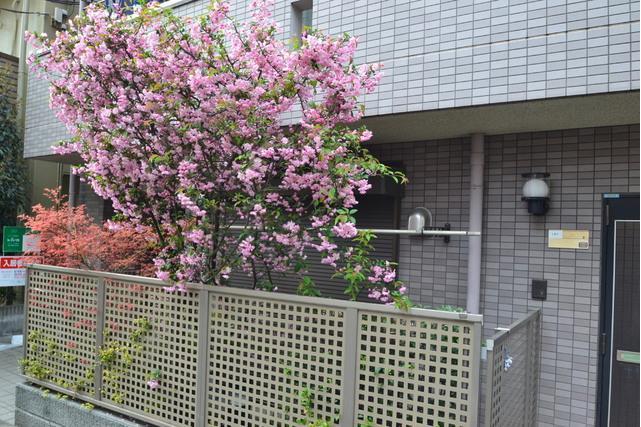 2LDK Apartment to Rent in Toshima-ku Exterior